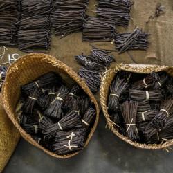 10 Bourbon Gold Vanilla Beans 16-17cm L - Madagascar