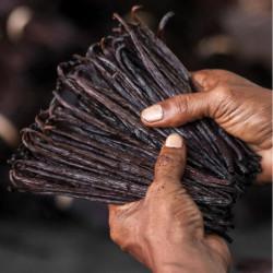 10 Bourbon Gold Vanilla Beans 18-19cm XL - Madagascar