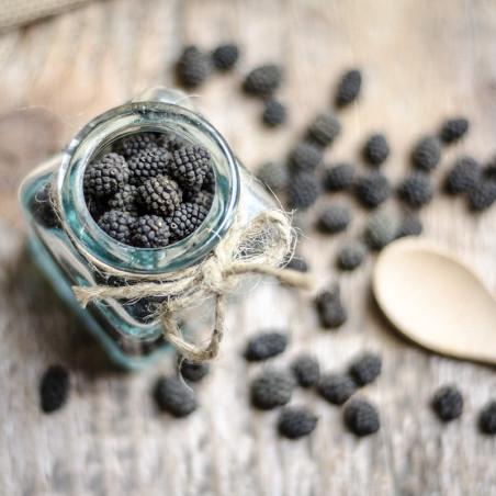 Poivre d'Assam - Inde - David Vanille : Vente de poivres rares.