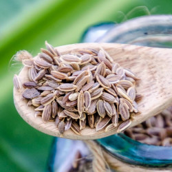 Dill seeds - India