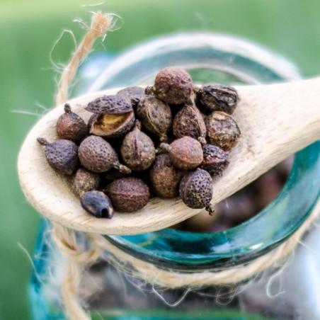 Poivre Balsamique - Cameroun - Vente de poivres rares