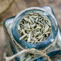 Fennel seeds - Egypt