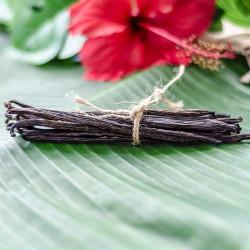 Dried Vanilla Beans 8-12cm XS - Papua New Guinea