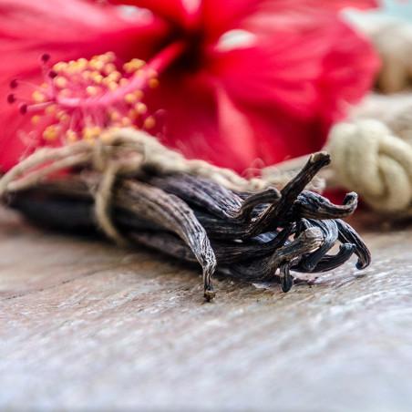 Gousses de Vanille Sèche +10cm XS - Papouasie Nouvelle-Guinée