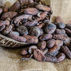 Fèves de Cacao Crues - Brut