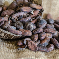Raw Cocoa Beans - Raw