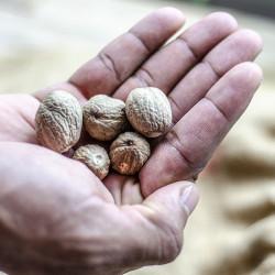 Whole Nutmeg Nutmeg - BIG...