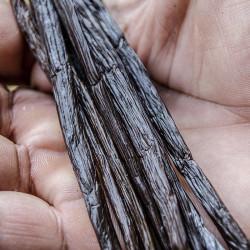 Planifolia Gourmet Vanilla...