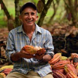Cocoa beans - Criollo...