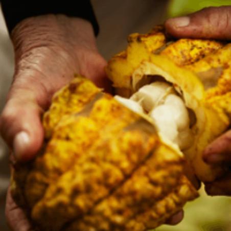 Fèves de Cacao - Nacional...