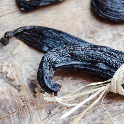 Pompona Schiede Vanilla - Guadeloupe
