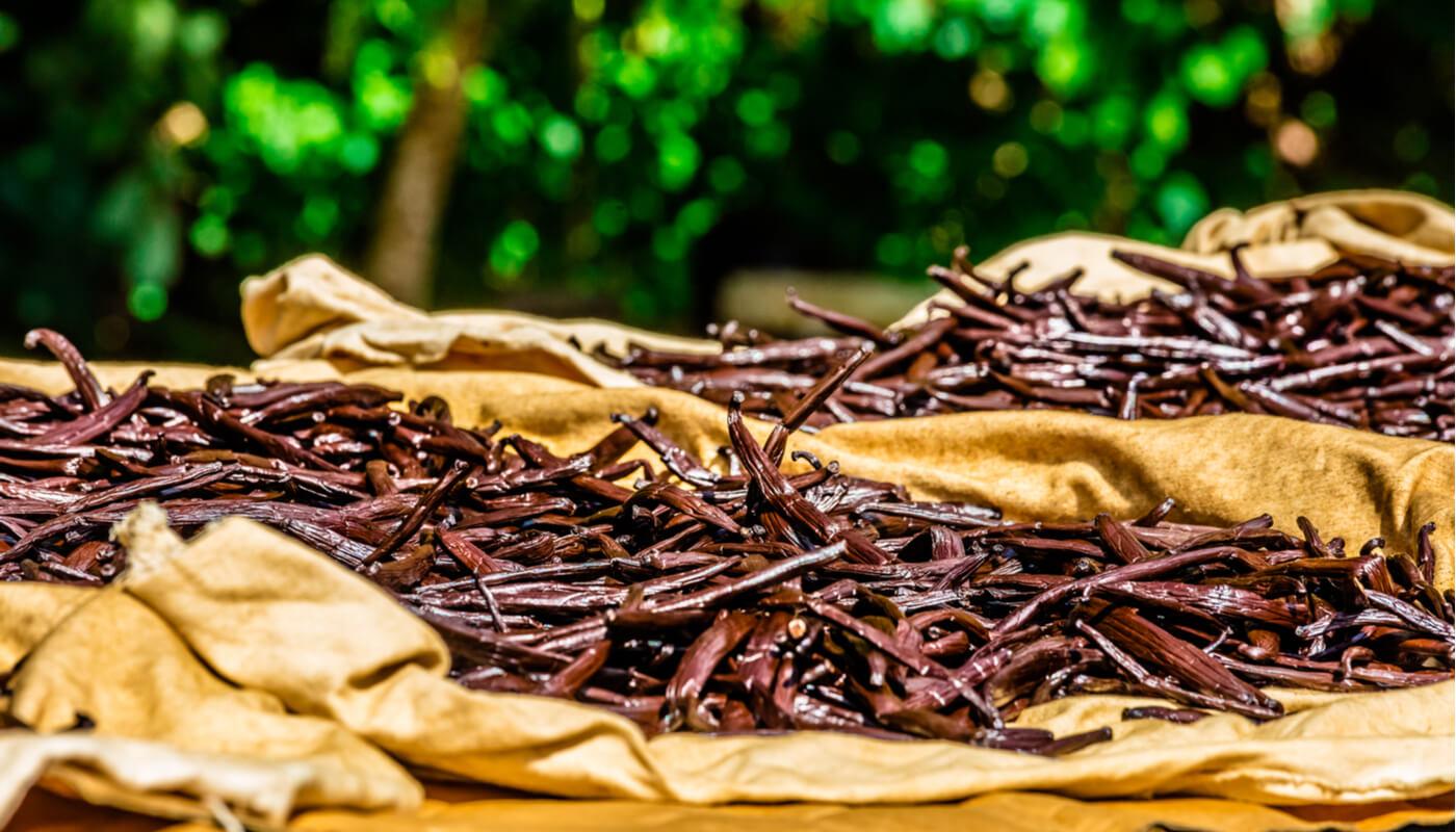 affinage-des-gousses-de-vanille-de-tahiti