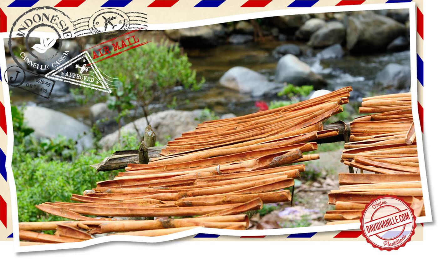 poudre-de-cannelle-cassia-indonesie