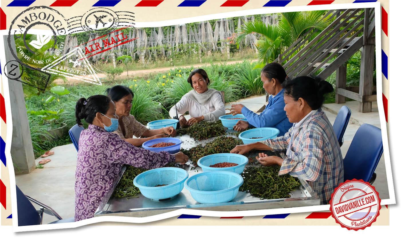 poivre-noir-kampot-cambodge