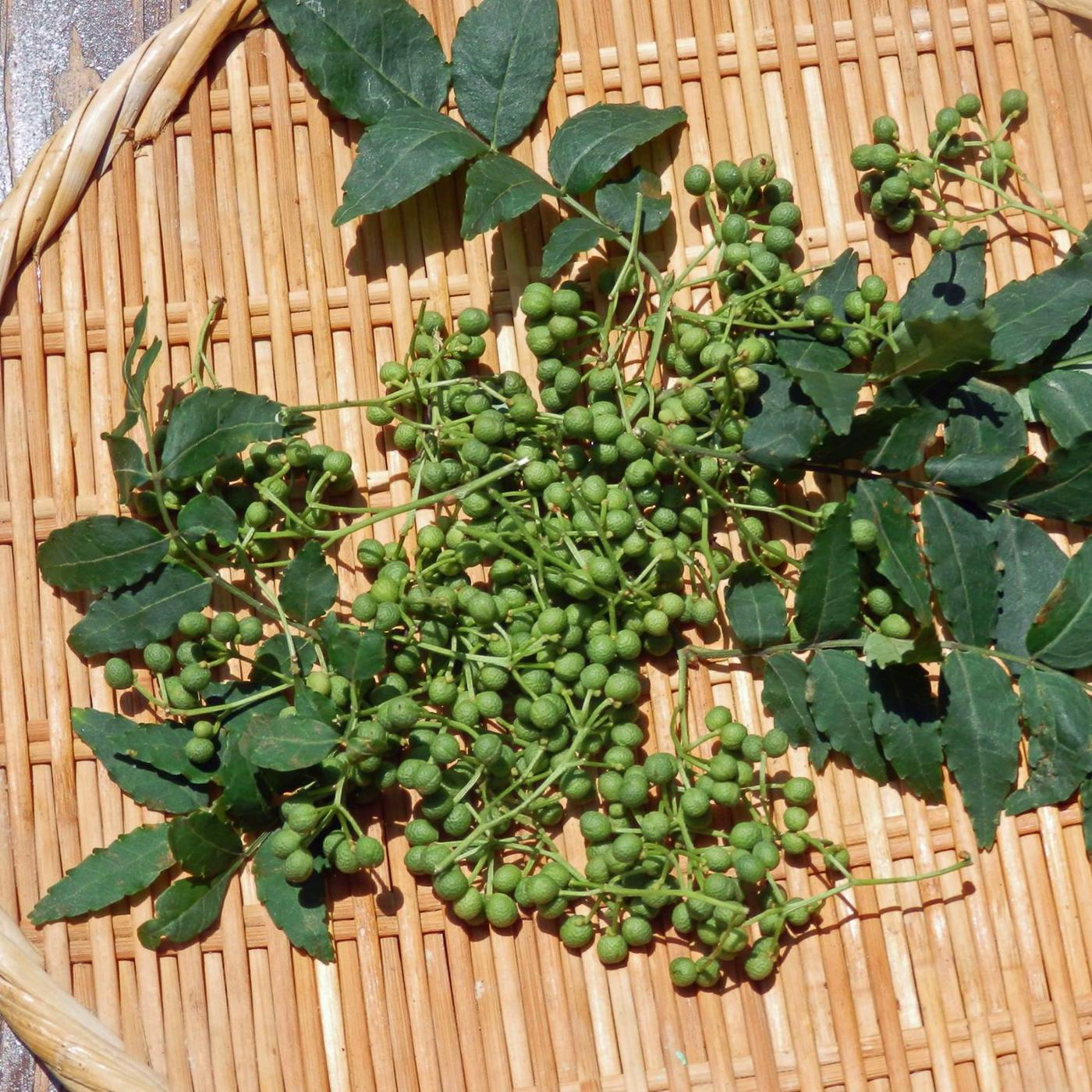 poivre-sansho-japon