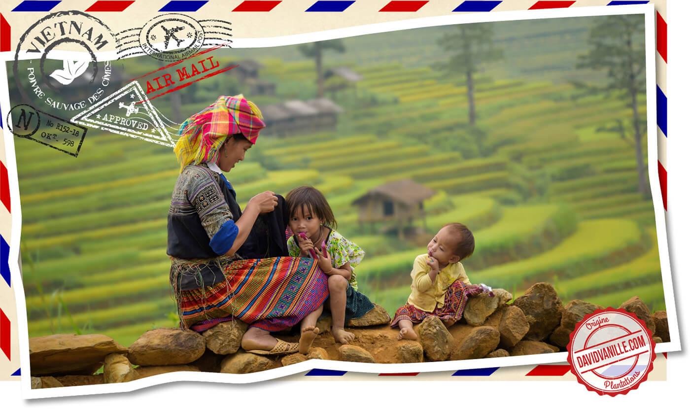 poivre-sauvage-des-cimes-vietnam