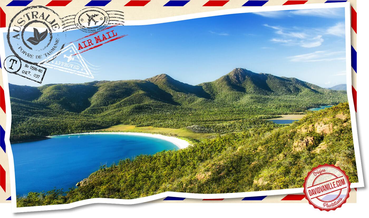 poivre-de-tasmanie