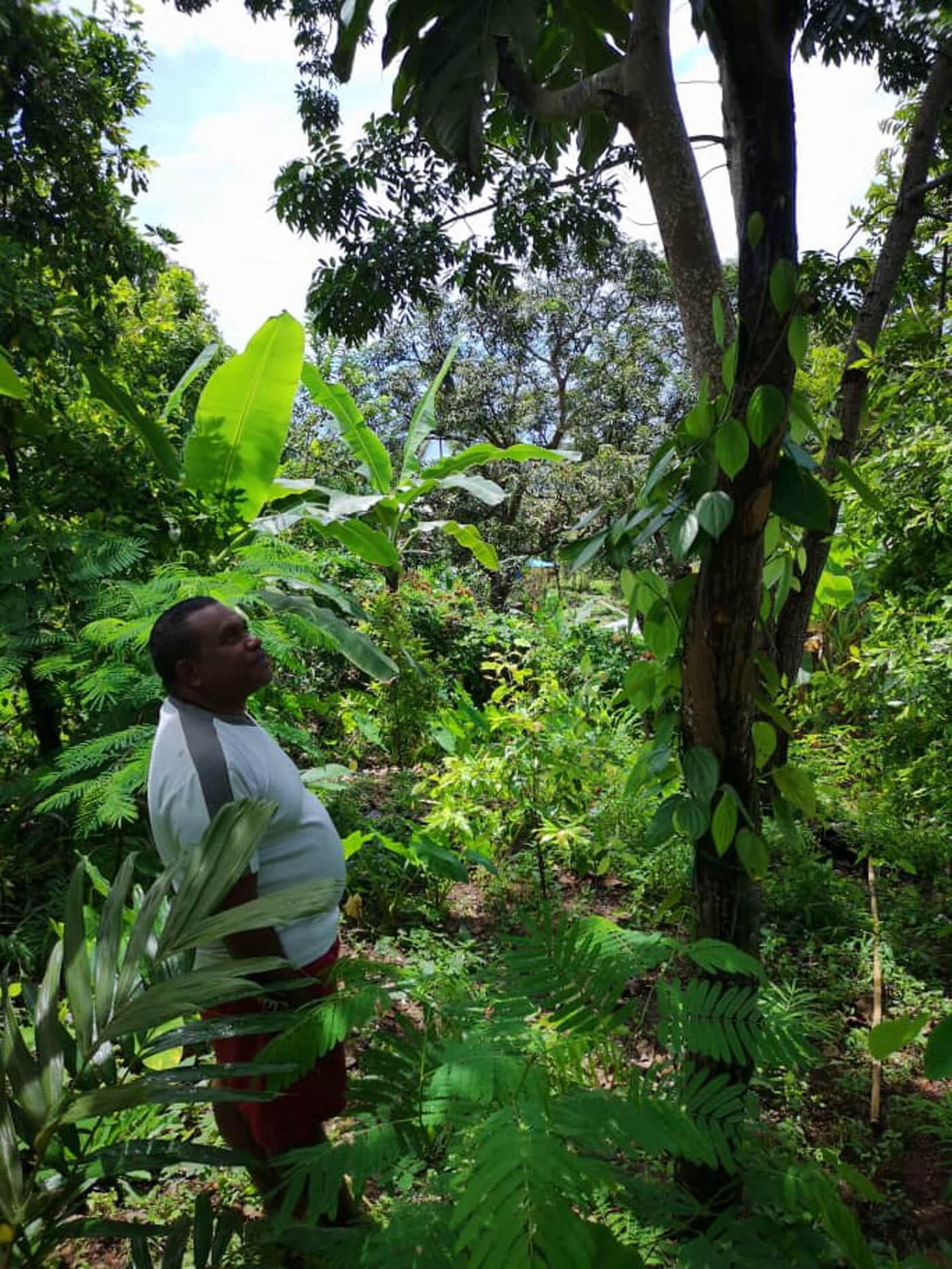 producteur-plantation-poivre-noir