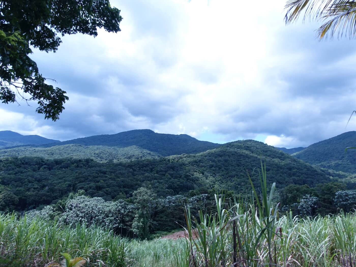 vue-plantation-vanille-guadeloupe
